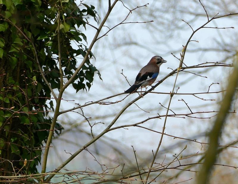 Quelques oiseaux  P1370013