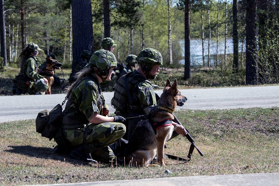Swedish Armed Forces/Försvarsmakten - Page 13 2034
