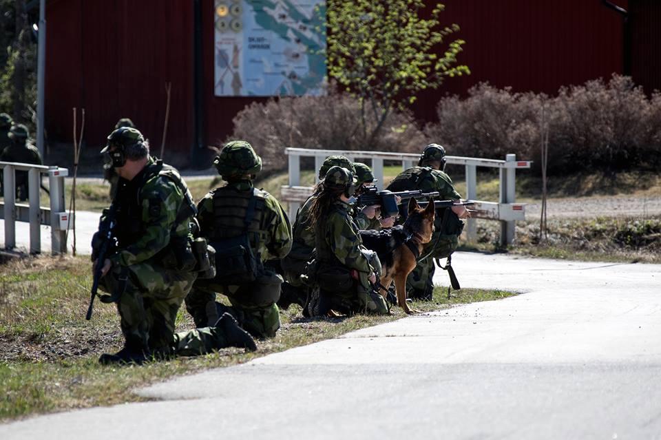 Swedish Armed Forces/Försvarsmakten - Page 13 2133