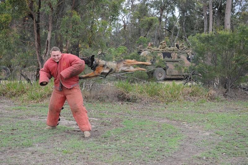 Armée Australienne/Australian Defence Force (ADF) 2433
