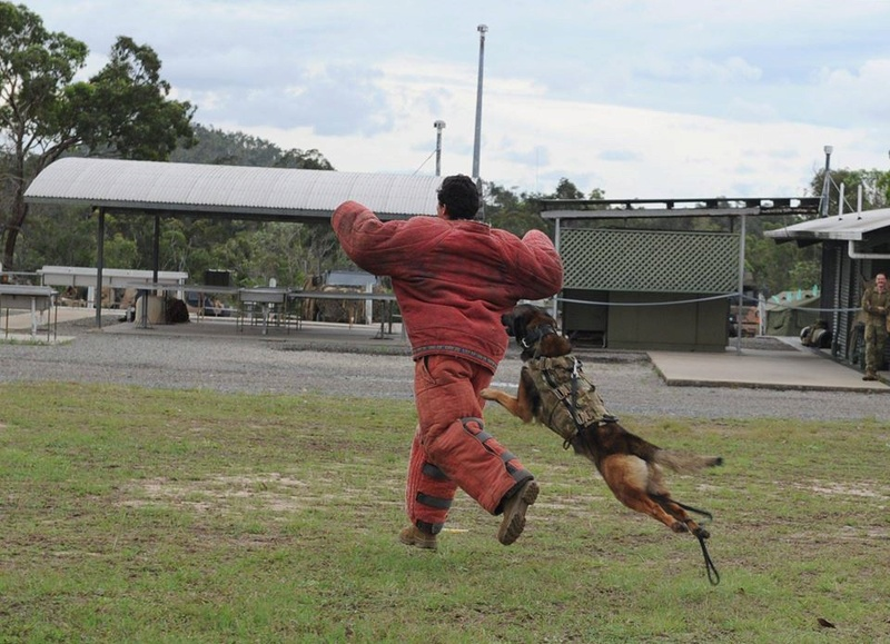 Armée Australienne/Australian Defence Force (ADF) 2532