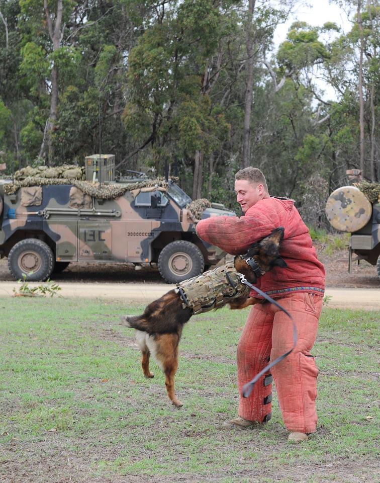 Armée Australienne/Australian Defence Force (ADF) 2627