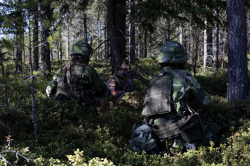 Swedish Armed Forces/Försvarsmakten - Page 13 2695