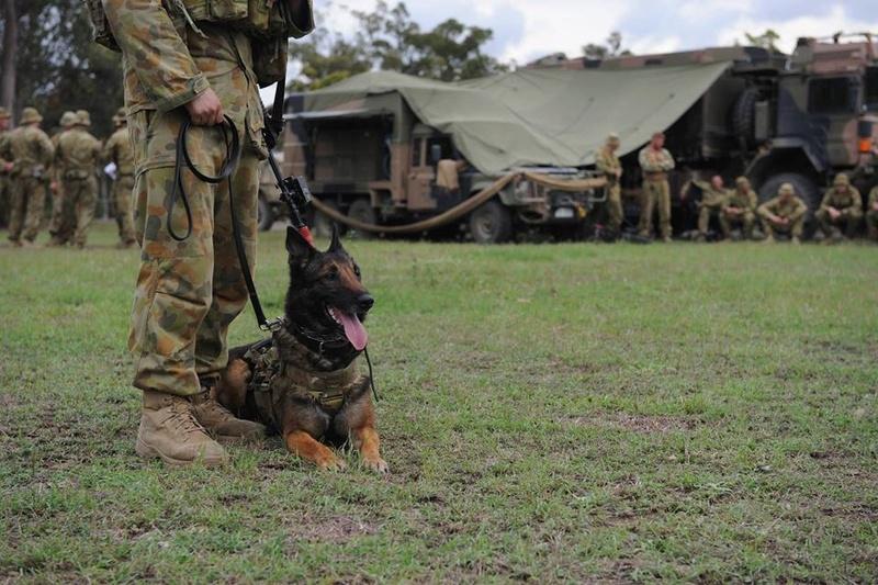 Armée Australienne/Australian Defence Force (ADF) 2725