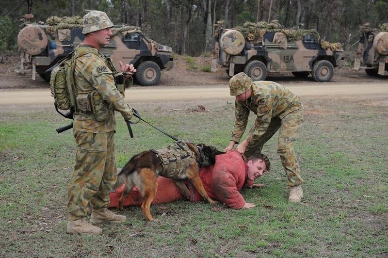 Armée Australienne/Australian Defence Force (ADF) 2823