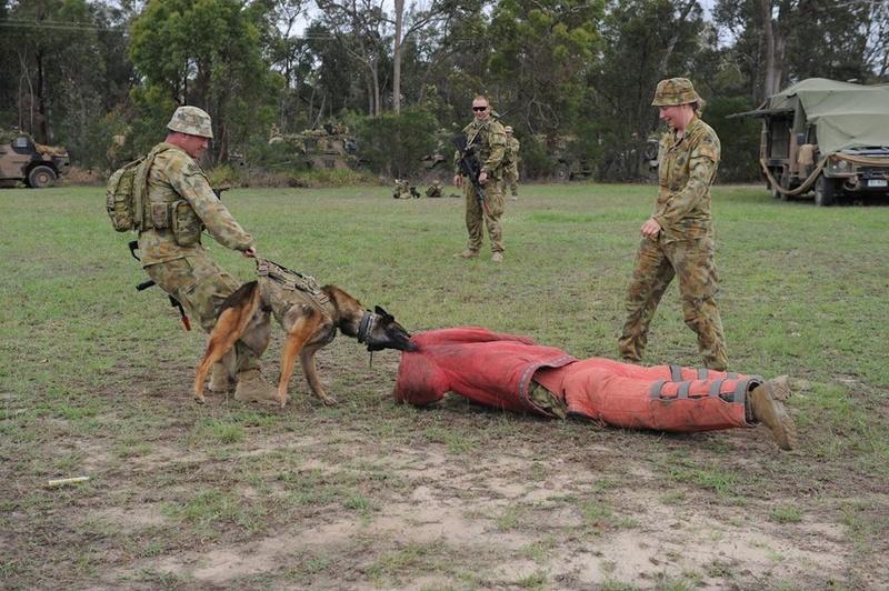 Armée Australienne/Australian Defence Force (ADF) 3019