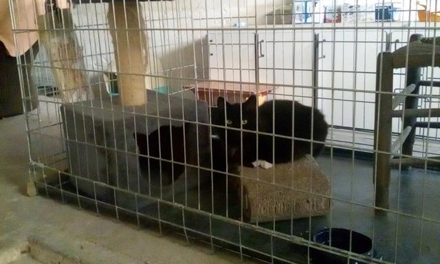Clochette, femelle type européenne noire angora née 1er mai 2017  Img_2017