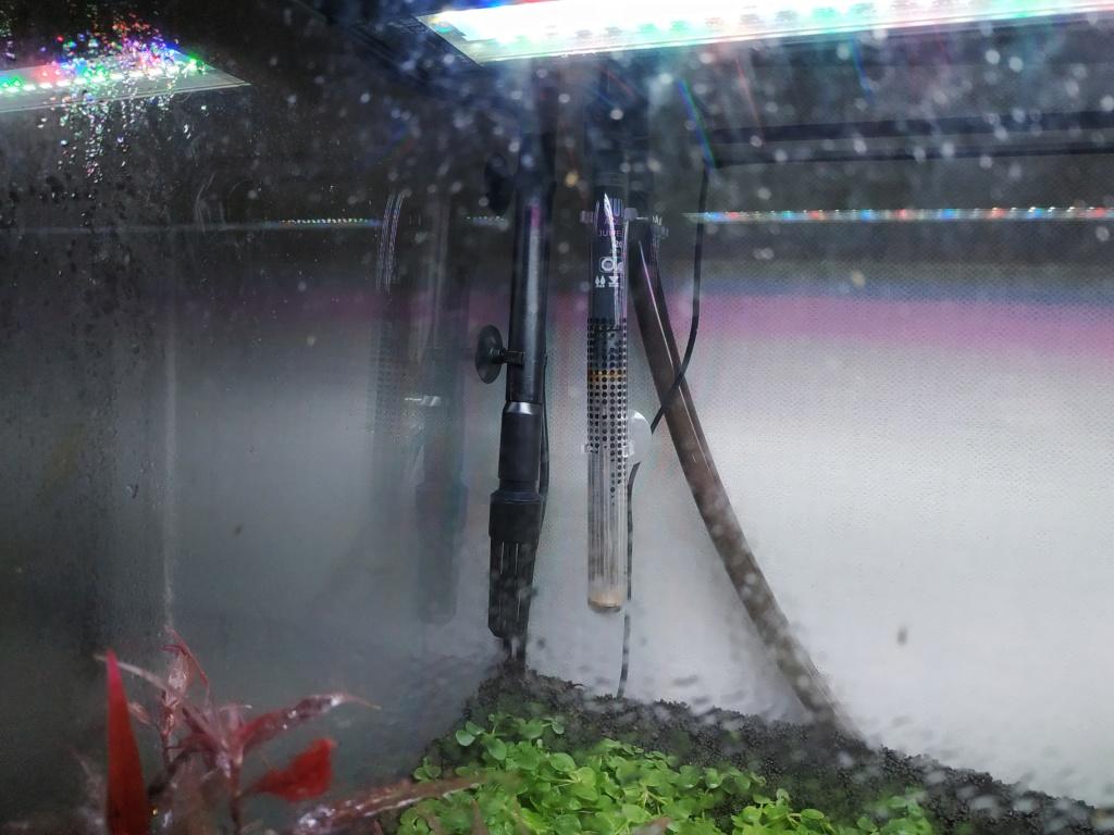 Retour à l'aquariophhilie : Rio 240 - Page 3 Img_2049