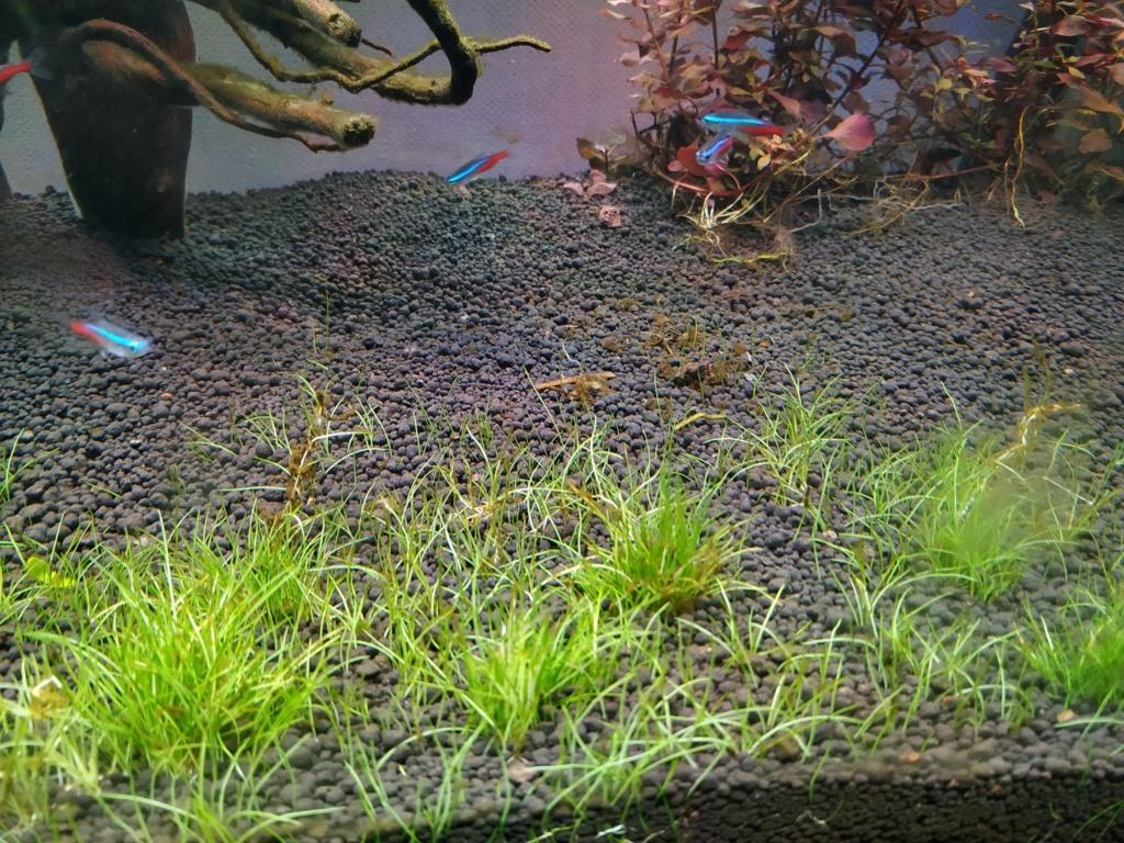 Retour à l'aquariophhilie : Rio 240 - Page 4 Img_2064