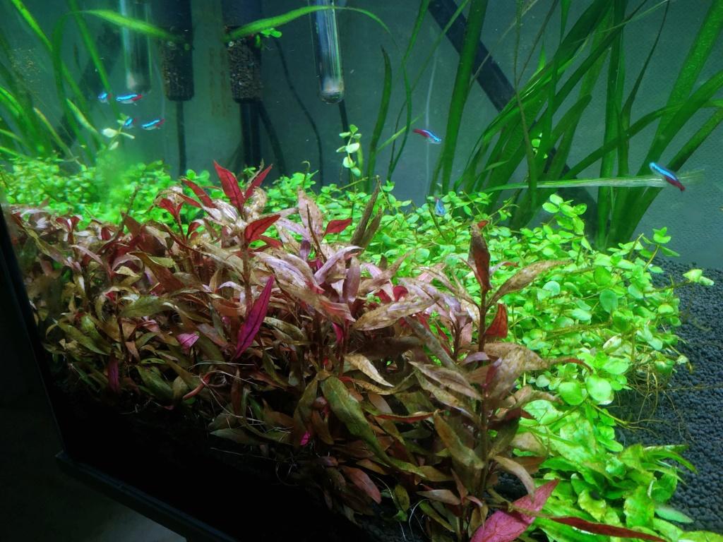 Retour à l'aquariophhilie : Rio 240 - Page 4 Img_2065