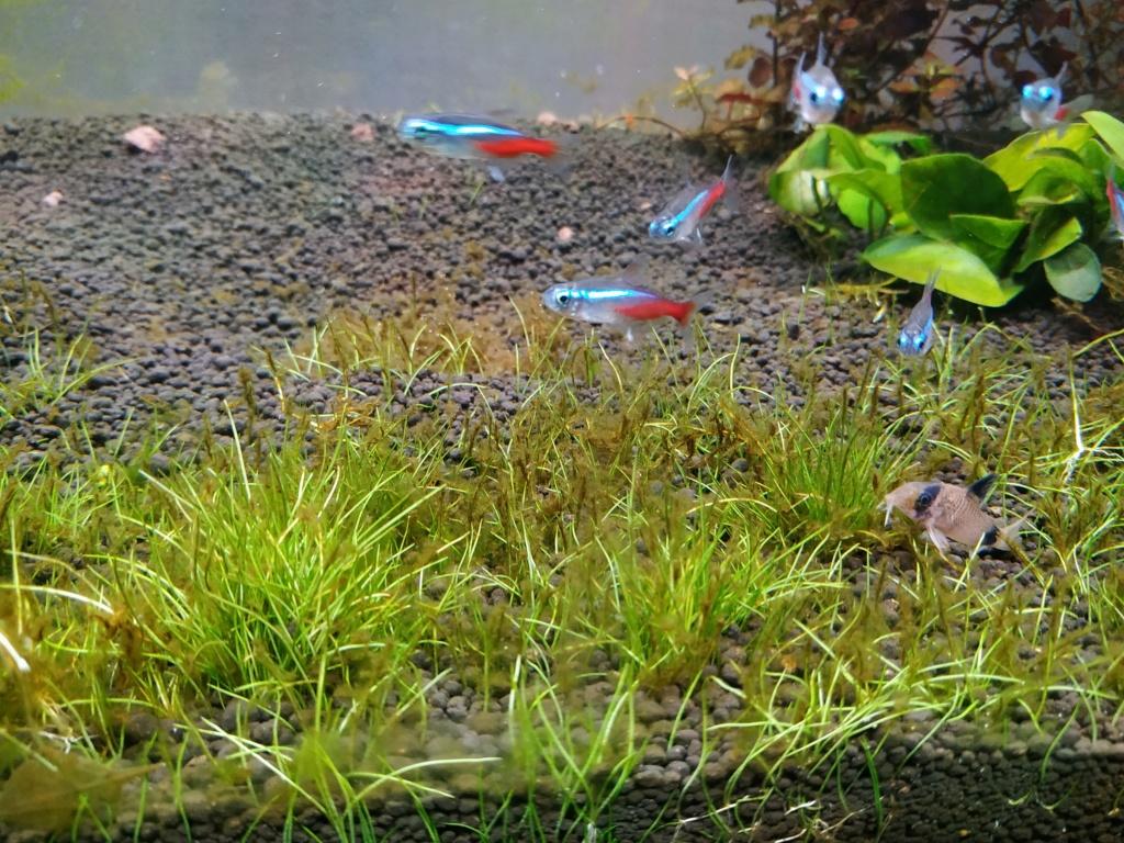 Retour à l'aquariophhilie : Rio 240 - Page 4 Img_2071