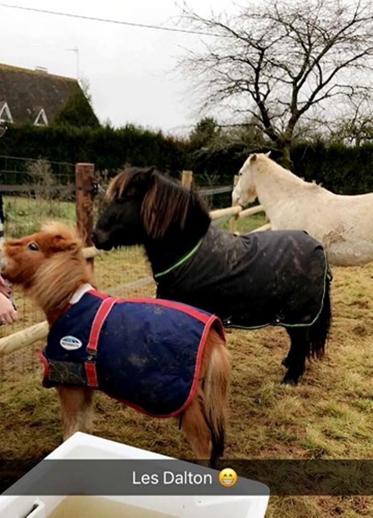GRIBOUILLE - ONC poney né en 1994 - adopté en août 2009 par caro41 1017
