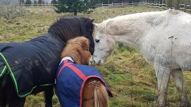 GRIBOUILLE - ONC poney né en 1994 - adopté en août 2009 par caro41 1130