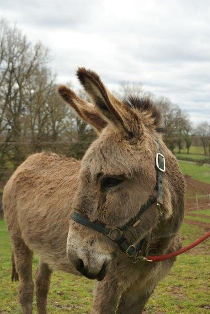BOURIQUET - ONC âne né en 2009 - adopté en août 2017 par Marie - Page 2 11_13
