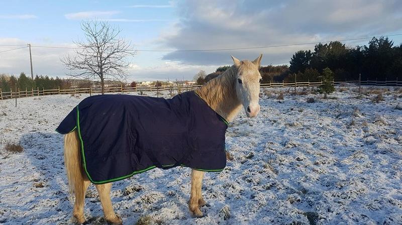 GRIBOUILLE - ONC poney né en 1994 - adopté en août 2009 par caro41 1325