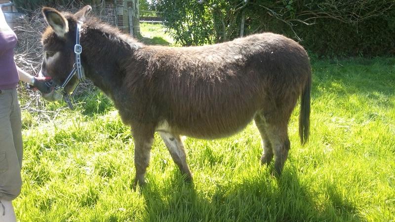ERNESTINE - ONC âne née en 2011 - adoptée en février 2017 par Cécile - Page 2 1339