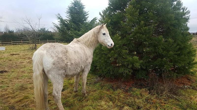 GRIBOUILLE - ONC poney né en 1994 - adopté en août 2009 par caro41 1723