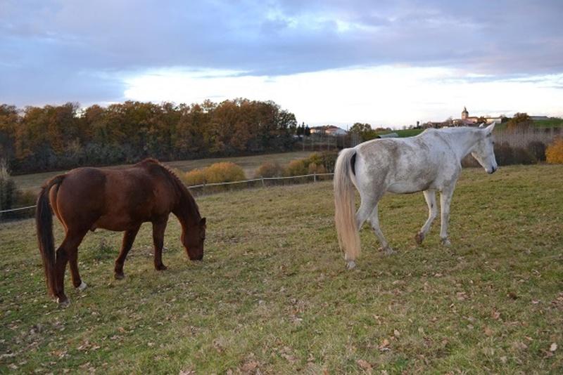 JERRY - ONC  selle (poney) né en 1991 - adopté en octobre 2015 par Patricia - Page 2 2014