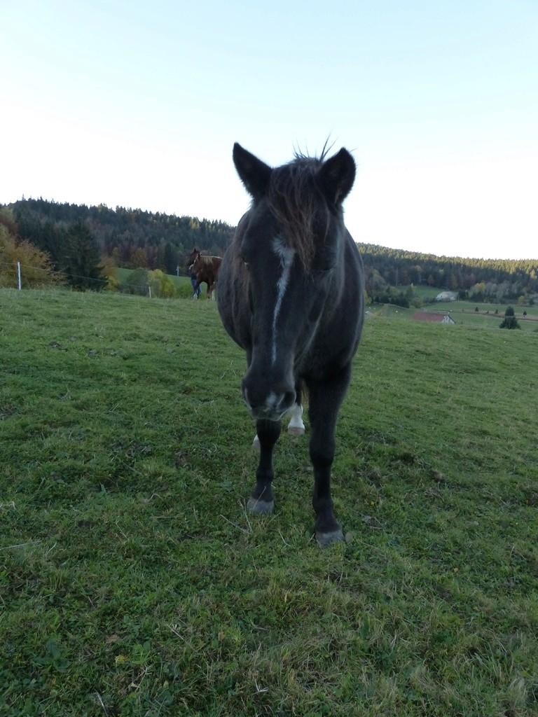 HAVANE - OI poney  née en 1995 - adoptée en mars 2014 par dona carlota - Page 3 2017_167