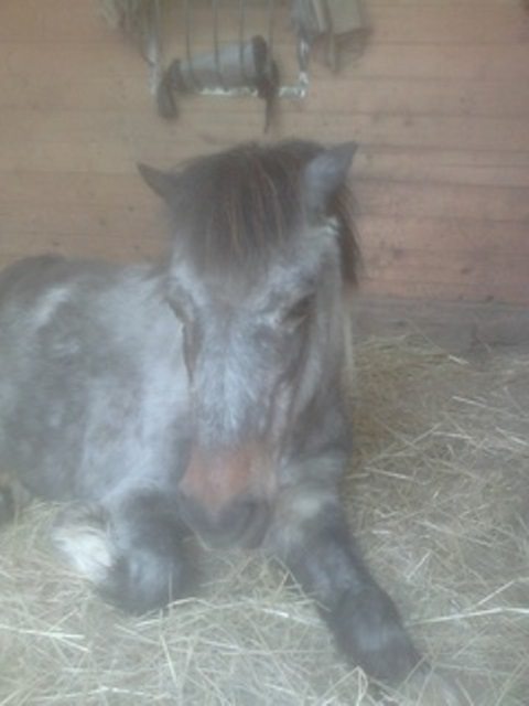 PRUNELLE - ONC poney née en 1986  - adoptée en octobre 2012 par Prosper - Page 4 2017_310