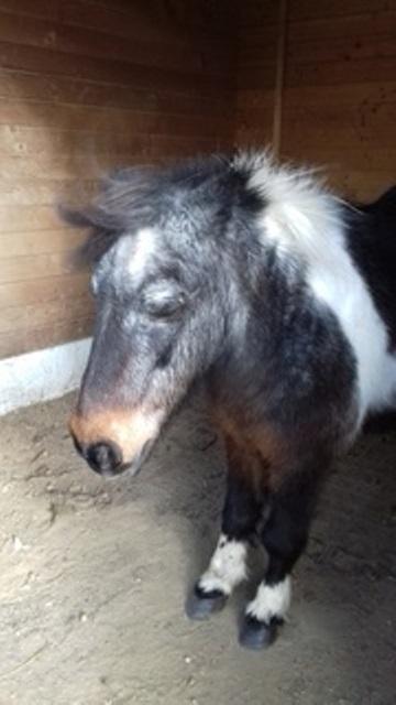 PRUNELLE - ONC poney née en 1986  - adoptée en octobre 2012 par Prosper - Page 4 2017_311