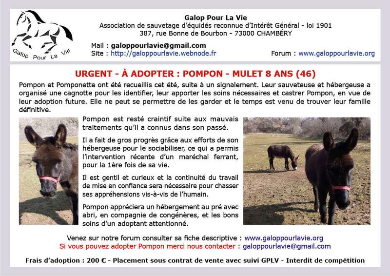 POMPON – Mulet présumé né en 2010 - Adopté en mai 2018 avec Pomponette par Martine 2018_131