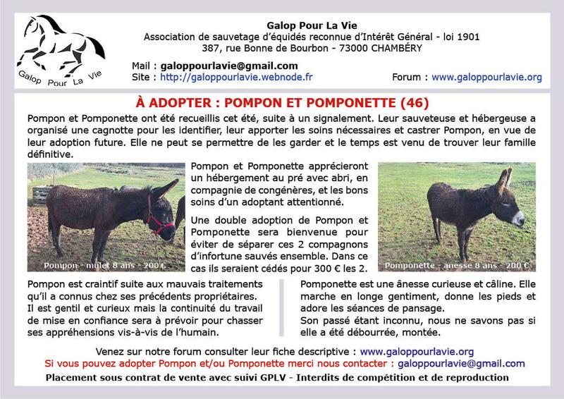 POMPON – Mulet présumé né en 2010 - Adopté en mai 2018 avec Pomponette par Martine Affich16