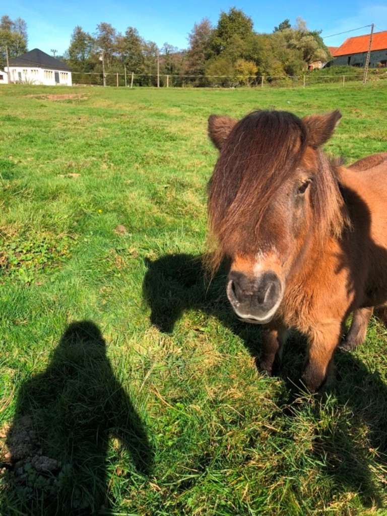AMULETTE - ONC Poney Type Shetland présumée née en 2010 - adoptée en juin 2016  par Amélie Amulet15