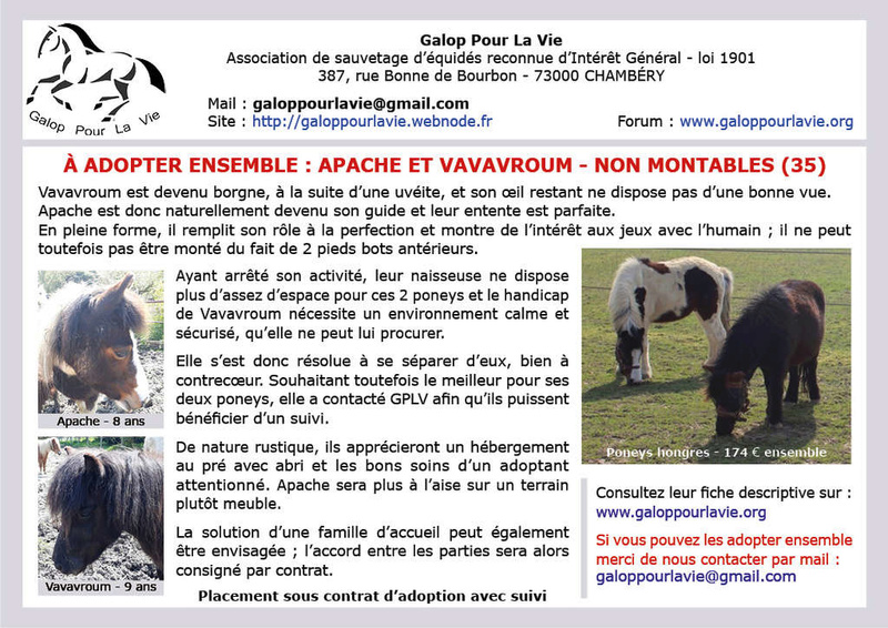VAVAVROUM (2010) et APACHE(2009) - ONC poneys type Shetland - adoptés en mars 2019 par Sylvie Apache19