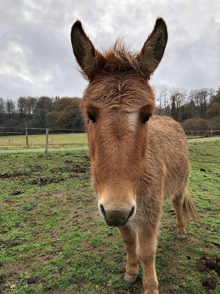 DIABLOTINE - ONC Mule née en 2014 - restée dans sa famille Photo_33