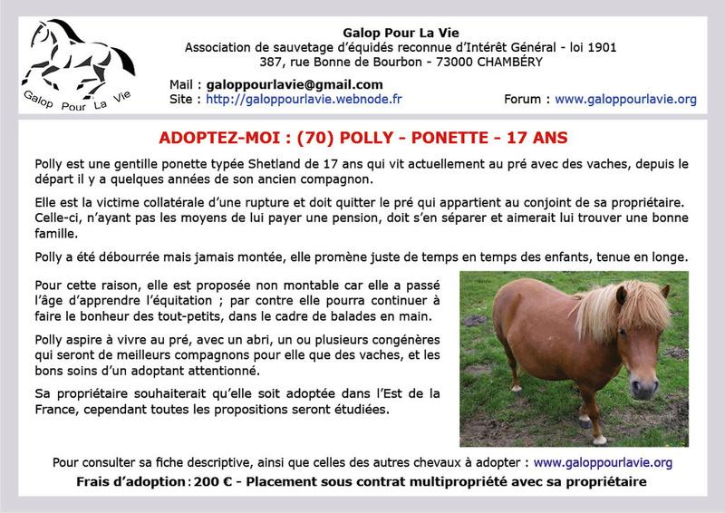 POLLY – ONC Poney typée Shetland née en 2001 – gardée par sa propriétaire Polly_10