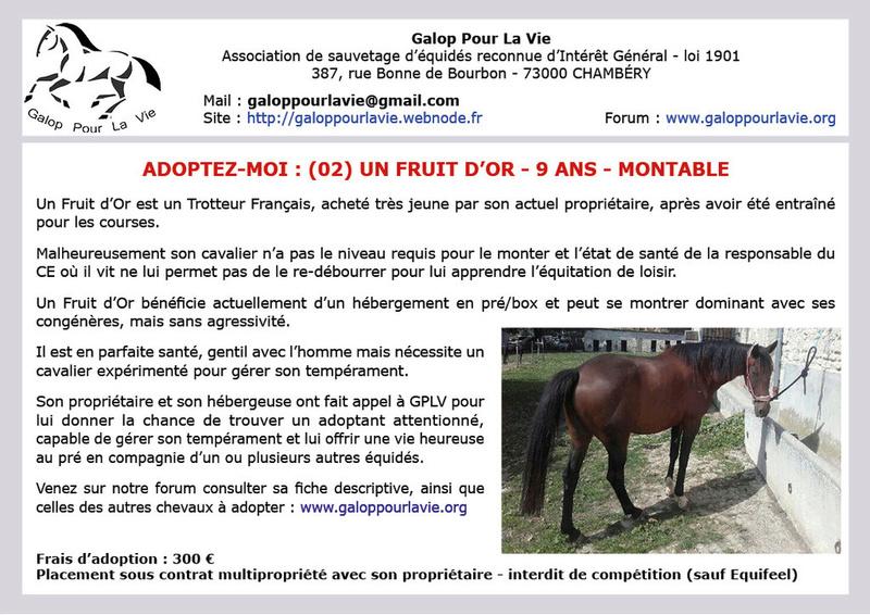 UN FRUIT D'OR (dit MAX)– TF né en 2008 – adopté en juillet 2019 par Laurine Un_fru10