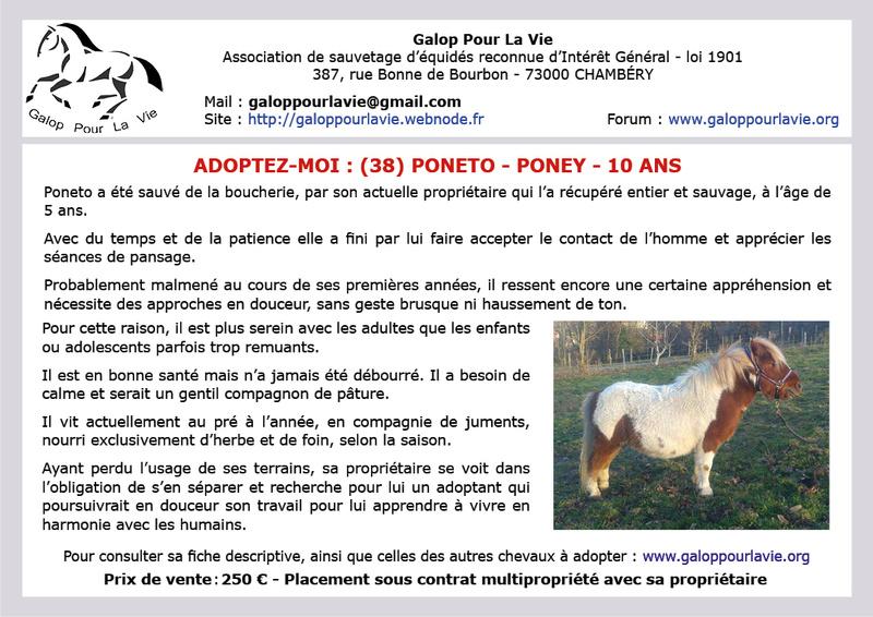 PONETO - Poney ONC typé shetland né en 2008 – Placé par sa propriétaire en octobre 2018 Z_affi12