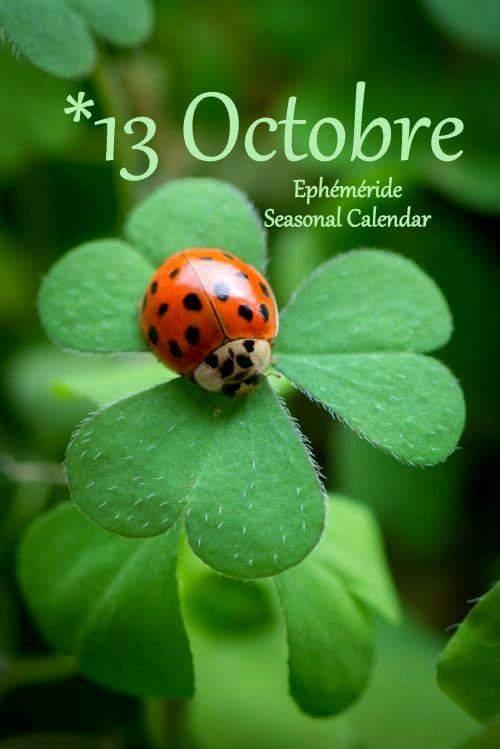 cairn d'Octobre 2017 - Page 6 22365310