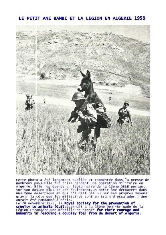 BELLE HISTOIRE avec 50 kgs sur le dos Bambi-10