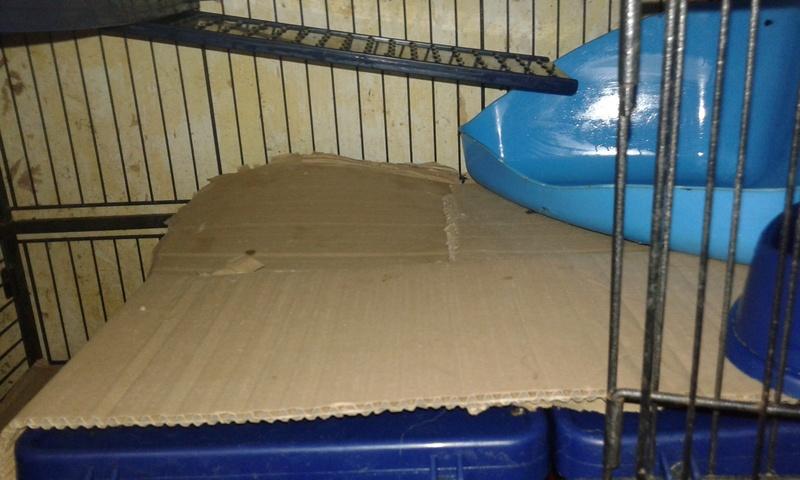 Mes cages à ratous  20180358