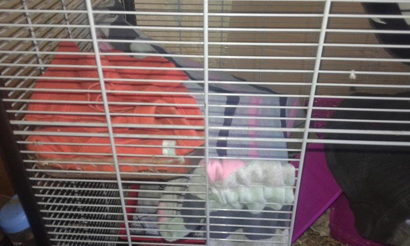 Mes cages à ratous  20180401