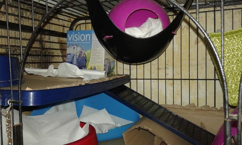 Mes cages à ratous  20180466