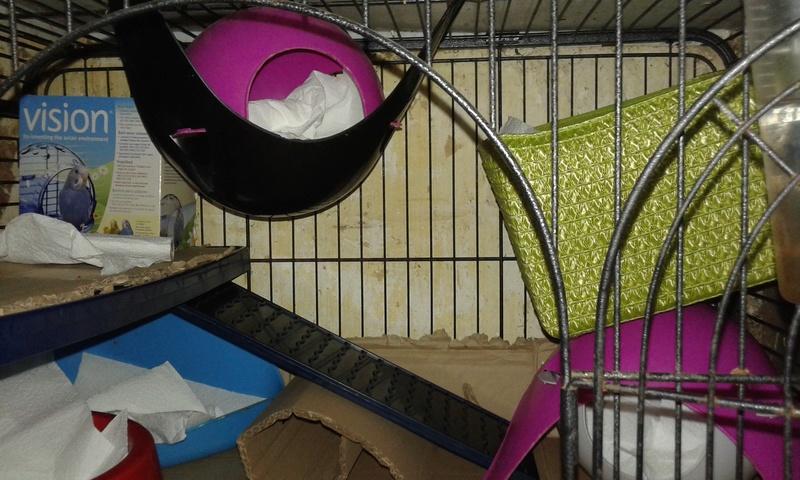 Mes cages à ratous  20180467