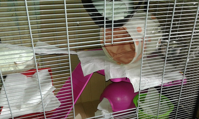 Mes cages à ratous  20180478