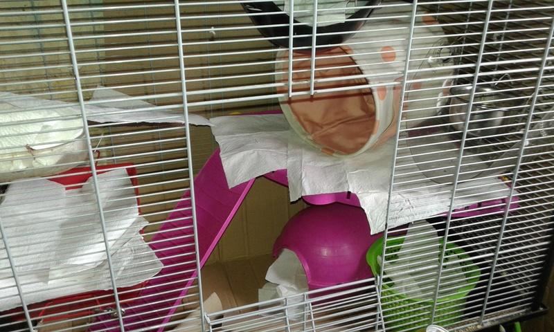 Mes cages à ratous  20180479