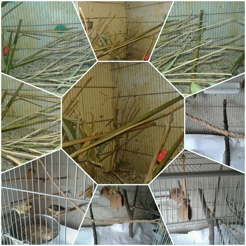 Bricoler deux cages - Page 2 Picsar17