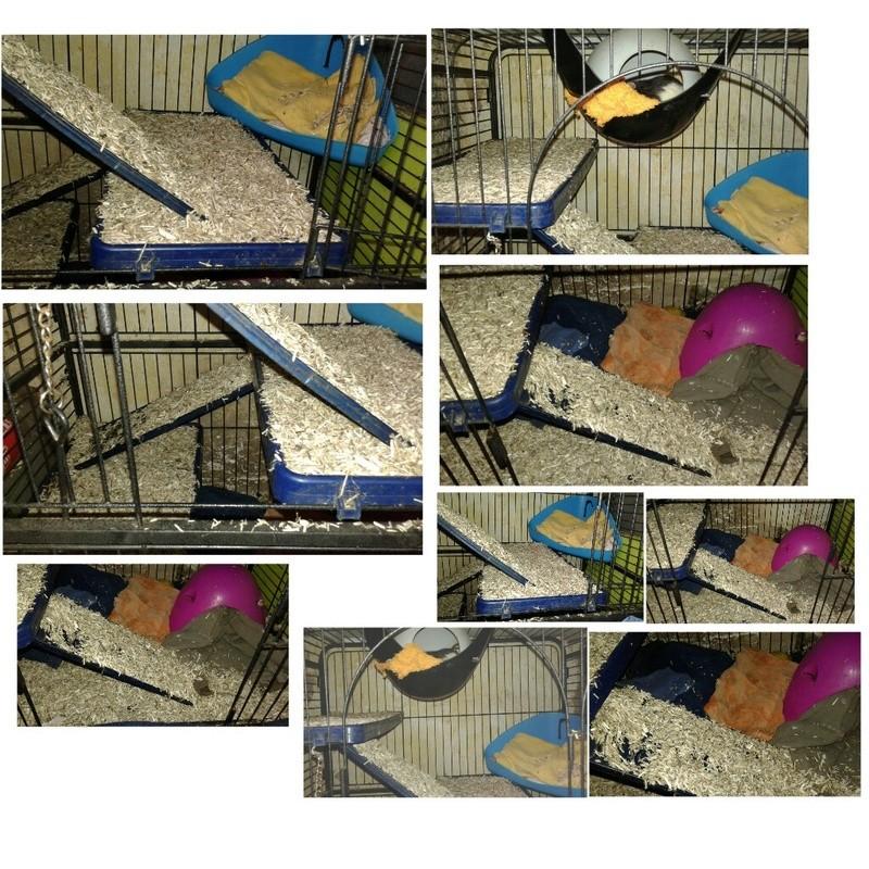 Photos de vos cages - Page 10 Picsar20