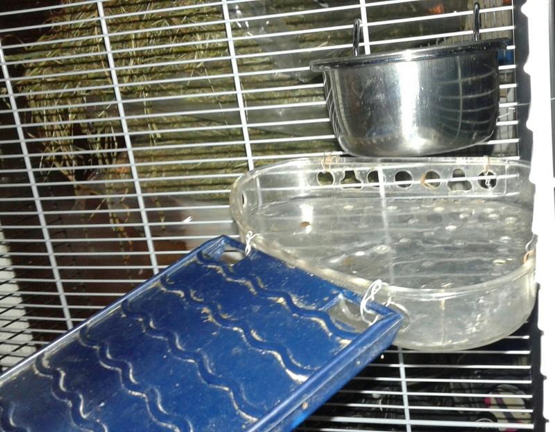 Cage de pet-sitting Picsar59