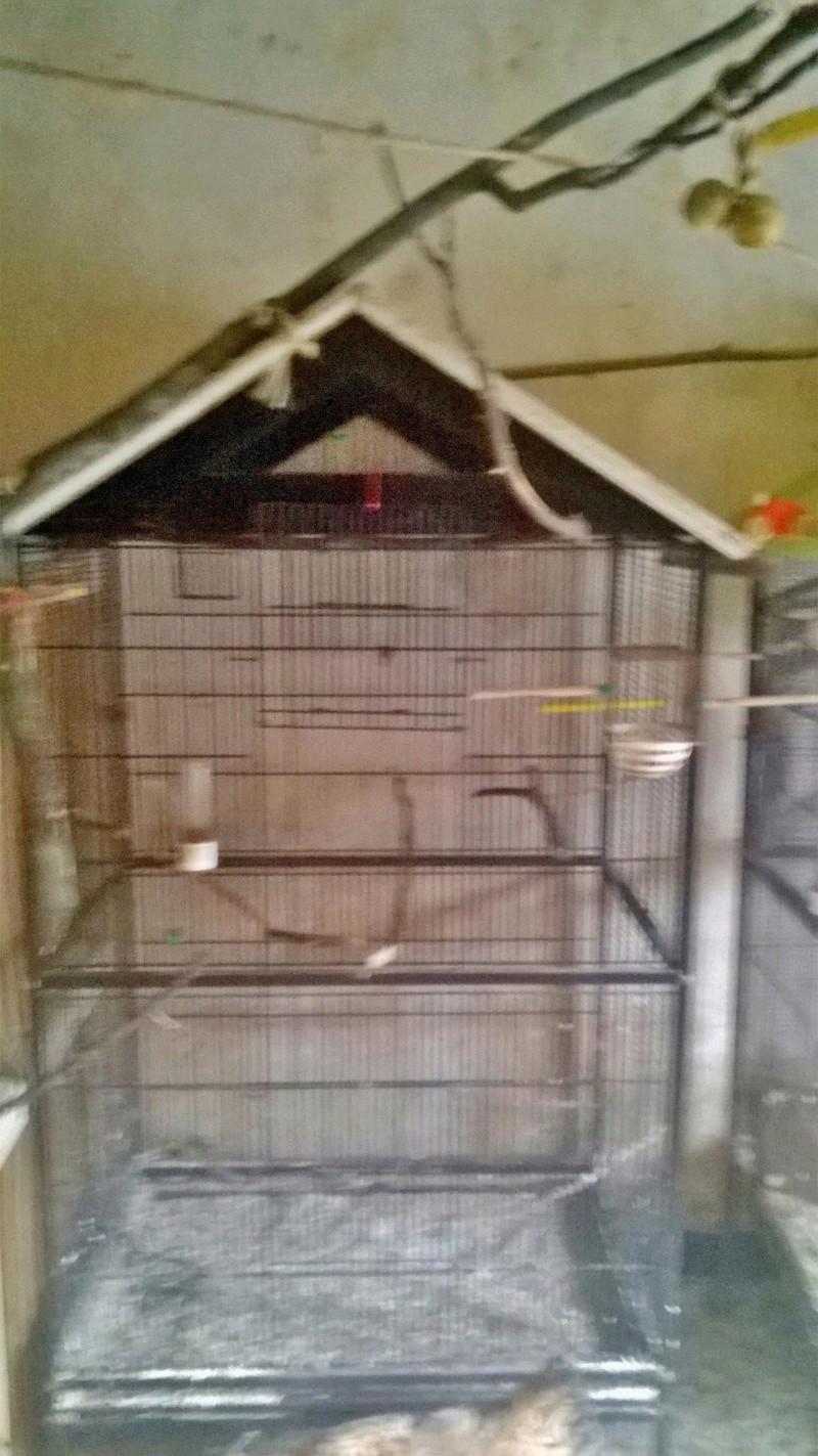 Bricoler deux cages - Page 2 Wp_20111