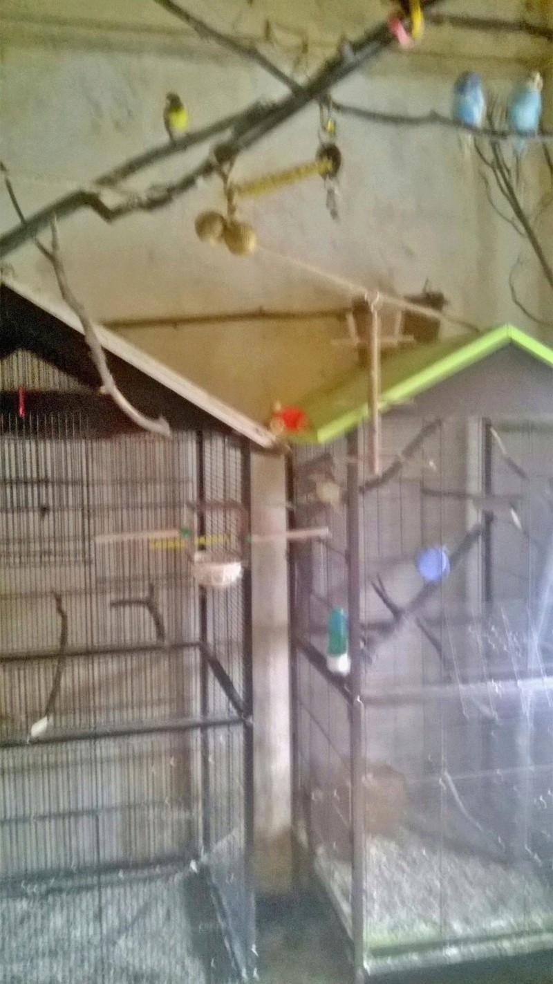 Bricoler deux cages - Page 2 Wp_20112
