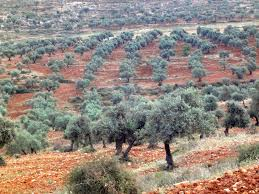 Nazareth  existait  il à l'époque de JC - Page 6 Vygyta10