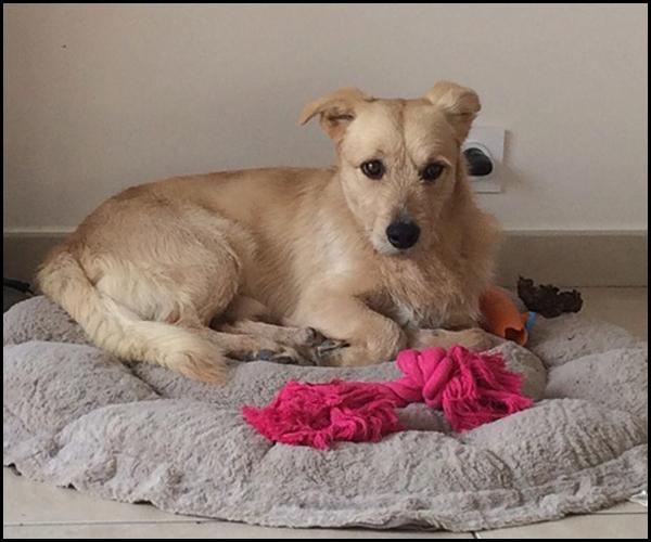 Petit TOBY à l'adoption Img_2115