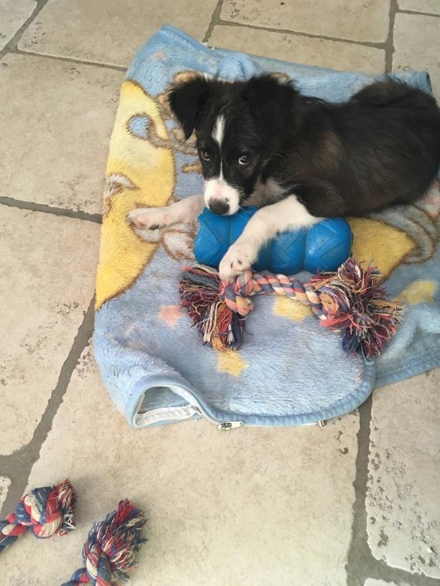 ORPHEE chiot 2 mois à l'adoption Img_4214