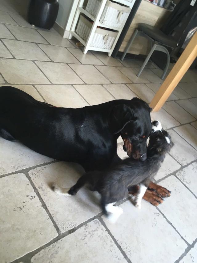 ORPHEE chiot 2 mois à l'adoption Img_4215